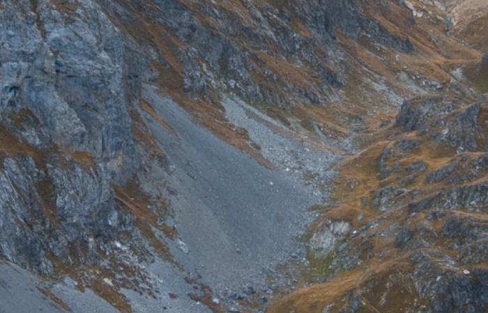Bouquetins pris lors du stage photo nature sur le bouquetin des Alpes en automne