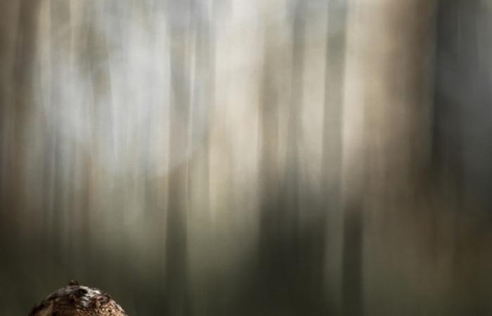 Champigon pris lors du stage photo d'automne dans la vallée de la Clarée,