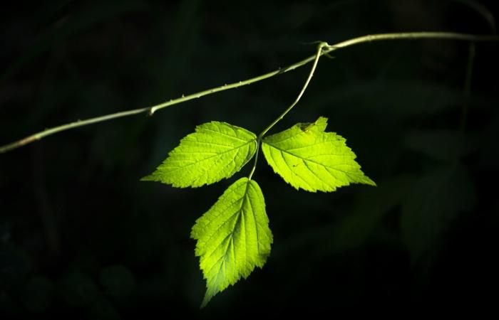 Rando photo dans les Ecrins, plantes des Alpes