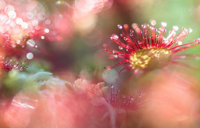 Stage photo en Aubrac à la découverte des fleurs