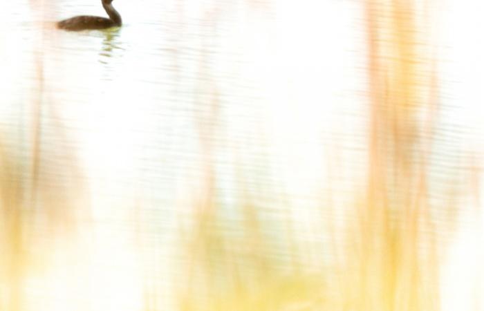 stage photo animalier en camargue