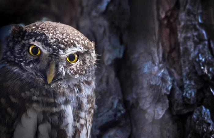 Apprendre la photographie animalière dans les Alpes