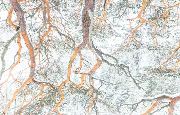 arbres pris à Ceillac lors d'un séjour photo hivernal