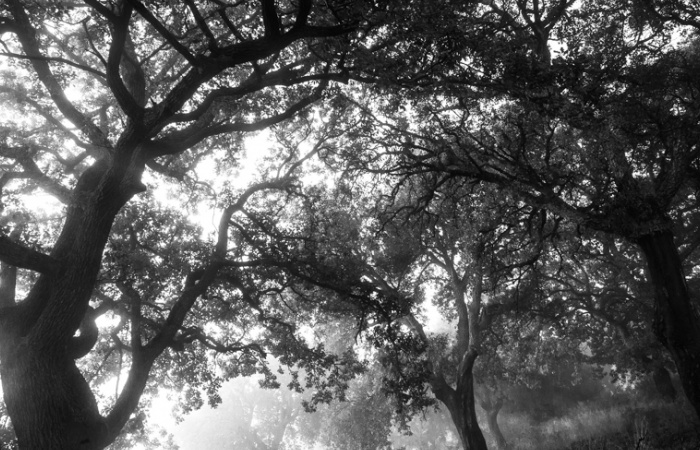 Nature montagnarde et forêt, Champsaur