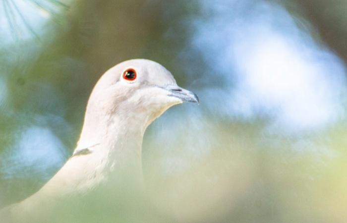 séjour photo oiseaux en Toscane