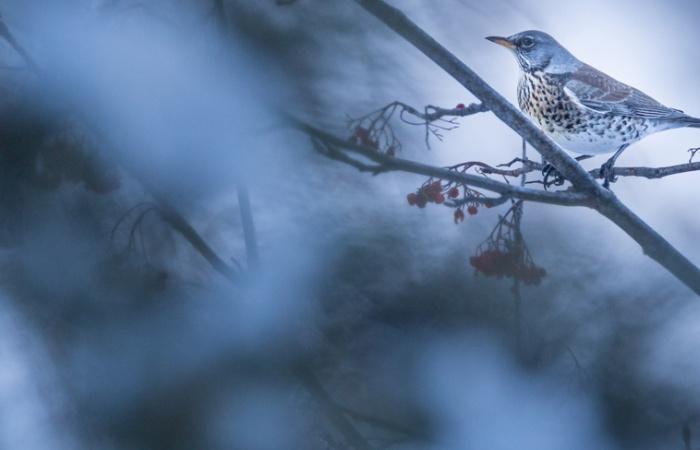 photo nature oiseaux en hiver en montagne / stage photo oiseaux